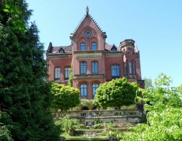 старый розовый куст в Германии 1000 лет
