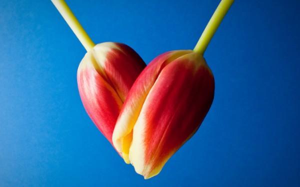 валентинка из тюльпанов